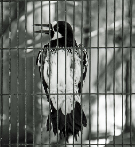 Bird In A Cage, Living Desert