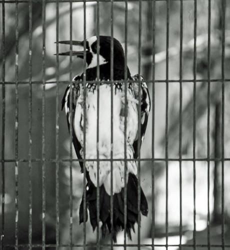 Bird In A Cage, Living Desert