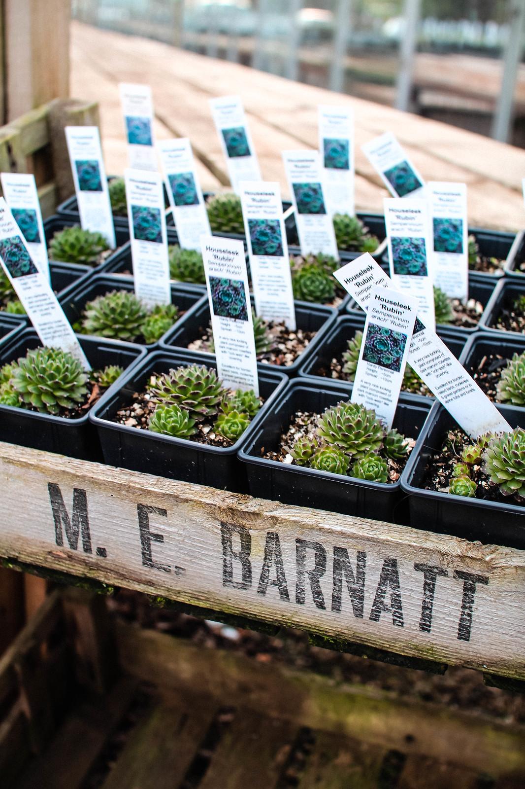 Edinburgh Secret Herb Garden Review Lifestyle blogger travel UK The Little Things IMG_7696