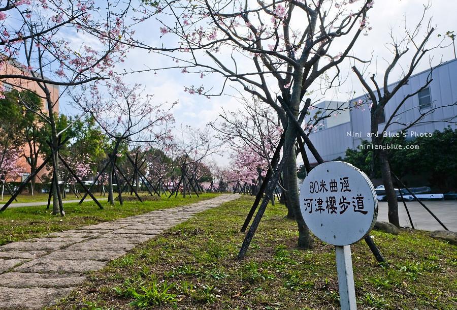 台中后里賞櫻花秘境12