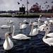IMG_1008 - Christchurch Quay - Dorset - 13.01.18