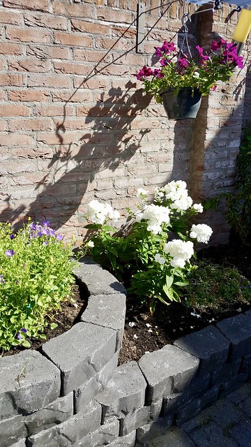 Border met bloemen in landelijke tuin