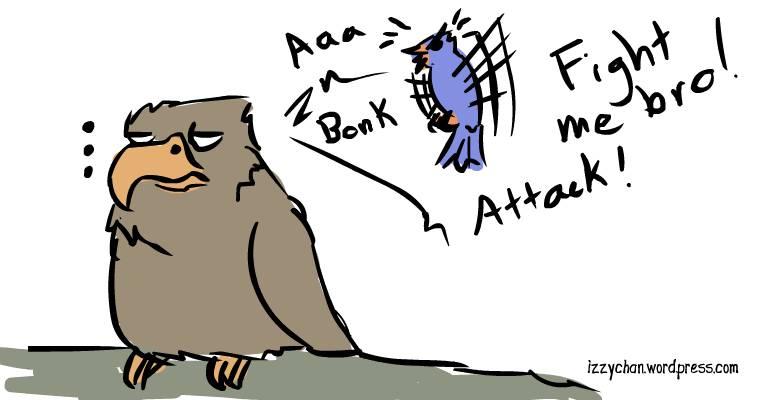 little blue bird attacking hawk