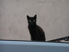 20070831 12014 0707 Jakobus schwarz Katze