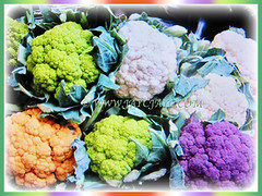 Brassica oleracea var. botrytis (Cauliflower, Broccoli, Calabrese, Romanesco) in varying colours, Feb 24 2018
