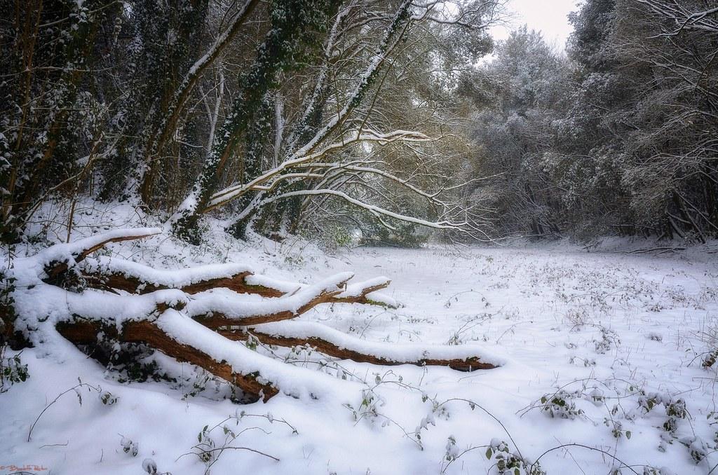 magia nel bosco d'inverno.....