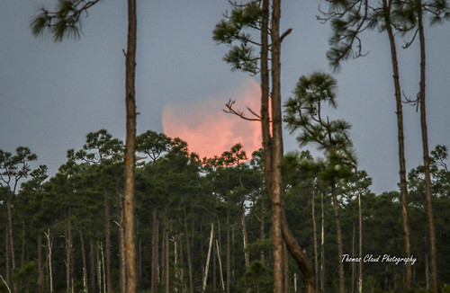 moon fullmoon superbluebloodmoon eclipse eclipsed trees nature mothernature astronomy pinegladesnaturalarea jupiter florida