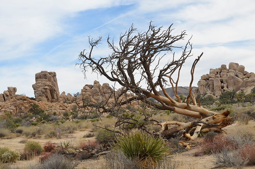 Joshua Tree - cool rocks with a tree