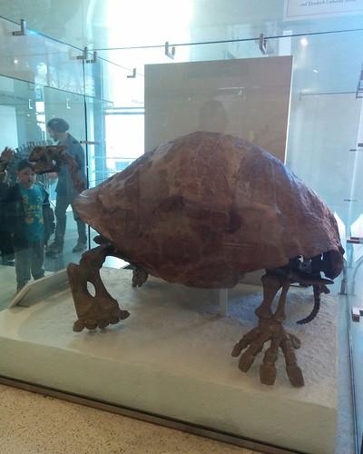 Ancient reptiles (2) #newyorkcity #newyork #manhattan #amnh #fossil #reptiles #americanmuseumofnaturalhistory #latergram