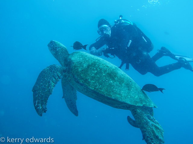 green-turtle-with-garth