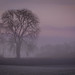 Misty Tree (Explored) by Claire Edwards Photography