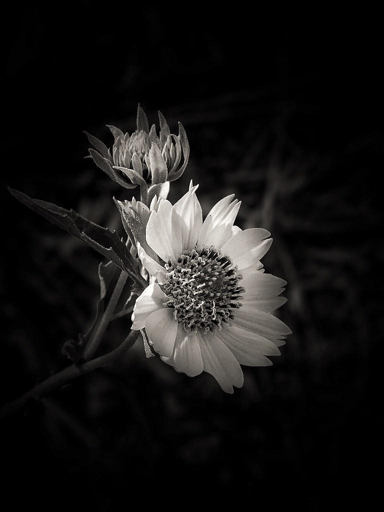 Wildflower Light