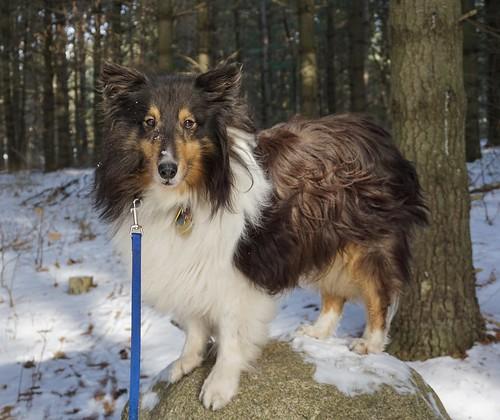 Handsome Jasper