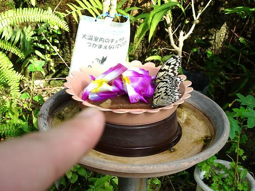 足立生物園の蝶