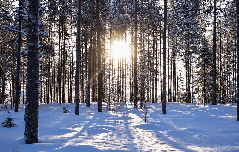 suomen luonto talvella8