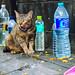 CAT 2018 05-313: Drink