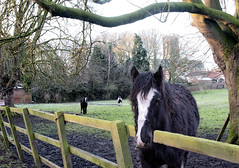 Horse in Station Road field