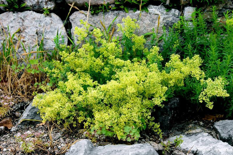 Растительность в Старом Баре