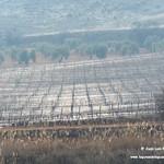 Amanecer y paisaje en las lagunas de La Guardia (Toledo) 19-1-2018