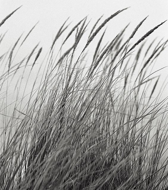 Woodman Point grasses