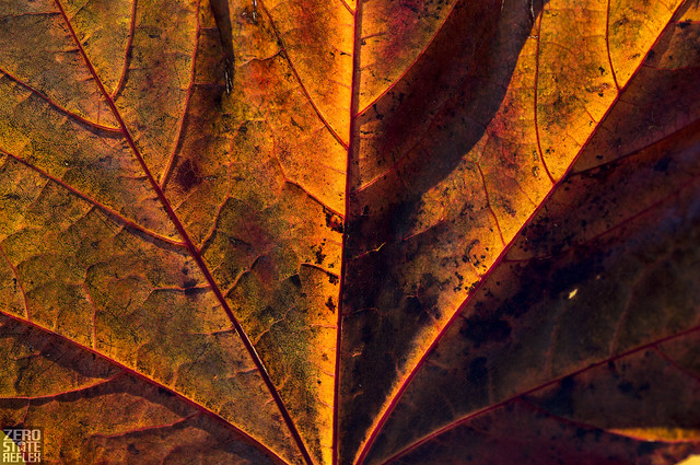 Seattle_Wedgewood_Leaf_Geometry, Canon EOS REBEL T1I, Canon EF 70-200mm f/2.8L IS II USM
