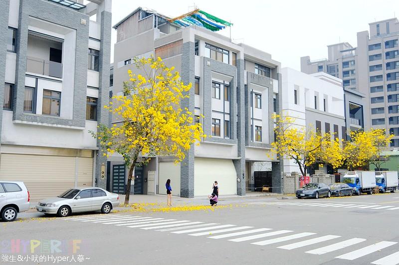 太順路黃金風鈴木2018 (4)