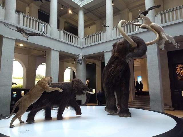 Landesmuseum für Vorgeschichte