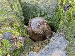 Otter a hole!!!