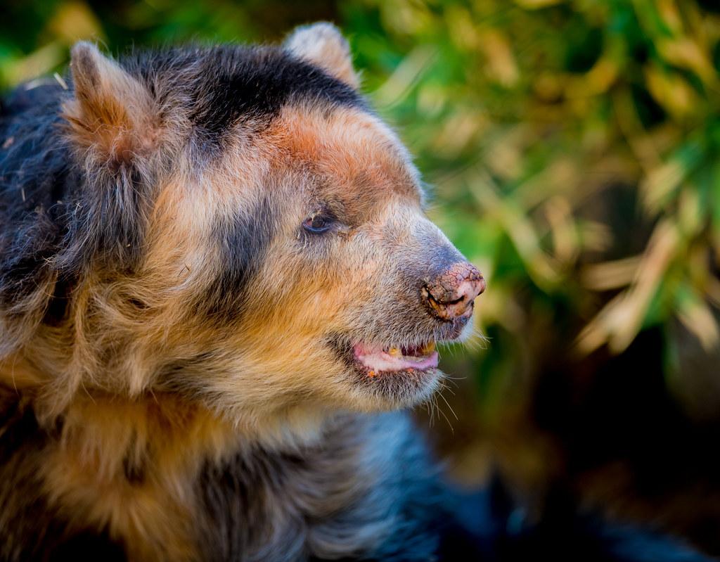 Andean Bear_1