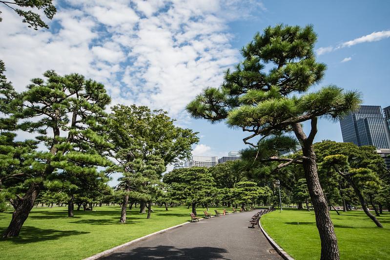 皇居外苑の写真