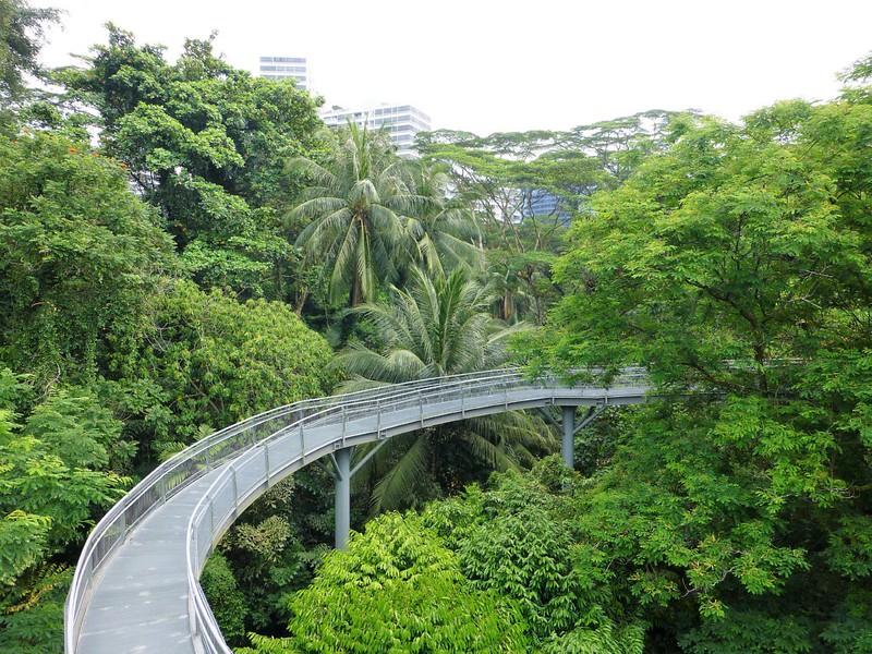 Singapore - Southern Ridges and MacRitichie Treetop Walks