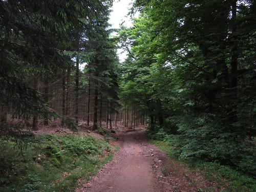 20170605 07 138 Regia Wald Weg