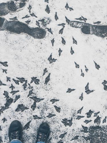 016 Spuren im Schnee