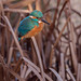 Twi-light zone Kingfisher...