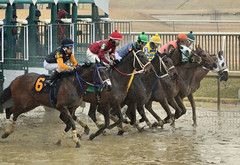 2018-02-10 (47) r5 'and they're off' at Laurel Park