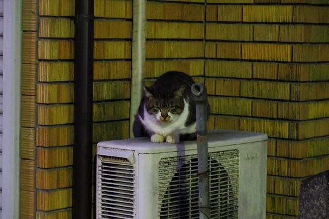 Today's Cat@2018-01-10