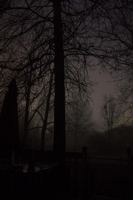 Jan 28 - Foggy morning