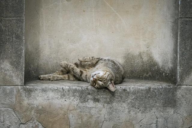 Relaxed cat blending in