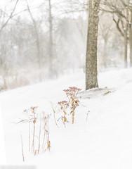 Snow falls in Manhattan
