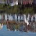 Brixham Harbour Reflection 05