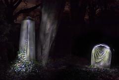Hull Cemetery, Spring Bank.
