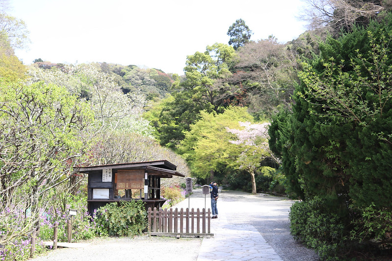 20170415_鎌倉アルプス_0377.jpg