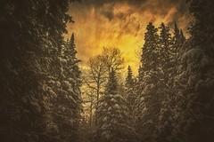 Winter Pre-Sunrise at Mill Creek