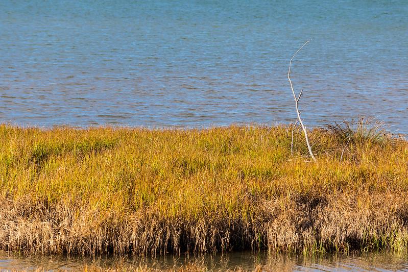 Grass at Whakatane Coast