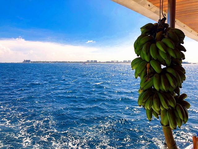 初日の出港時は晴れてたんだけど。。今回は曇り空が多くてバナナが全然熟してくれず。。
