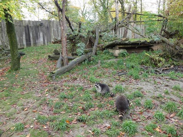 Gehege für Waschbären und Streifenstunk