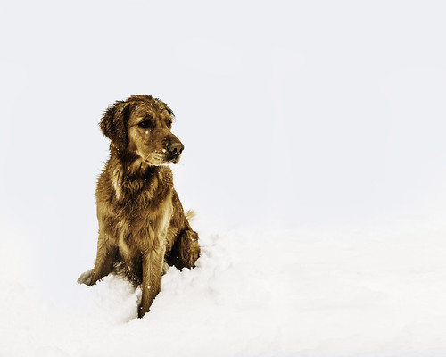 #PicOfTheDay dog in the snow