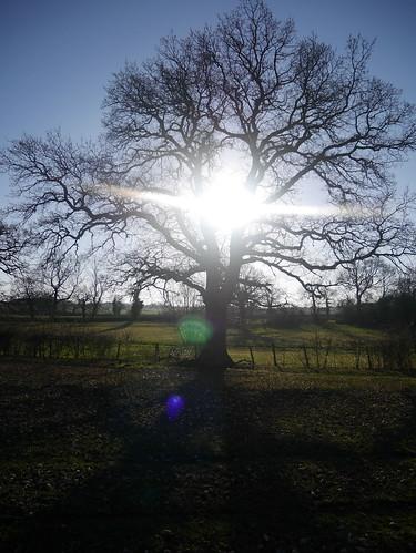 Sunshine in Warwickshire
