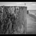 FILM - Seaweed on the outflow