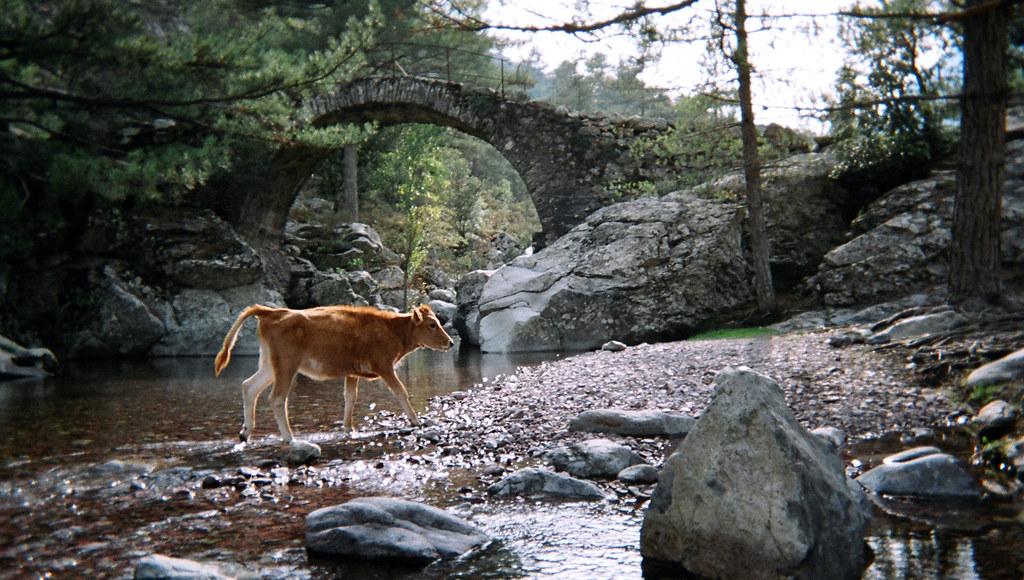 Pont génois dans le Forêt de Tartagine